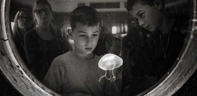 Doroczna Wystawa Fotografii Członków Stowarzyszenia Twórców
